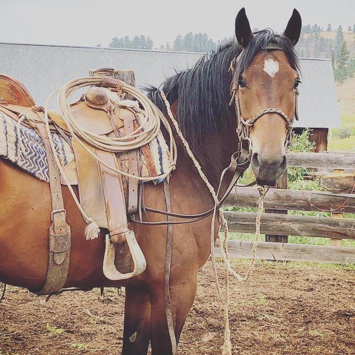 Montana Quarter Horses